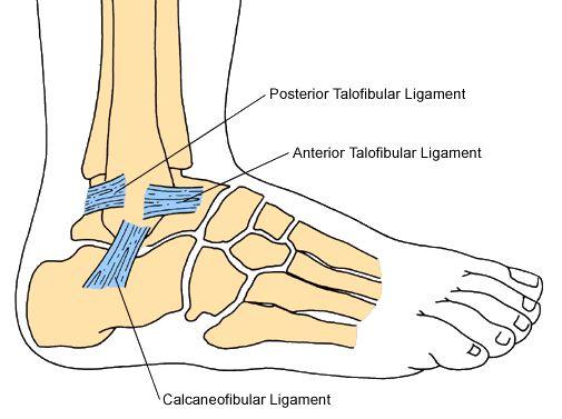 Ankle Instability Drwolgin